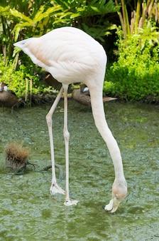 Afbeelding van vier flamingo's in het water