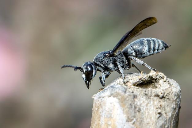 Afbeelding van zwarte wesp op de stronk op de natuur.
