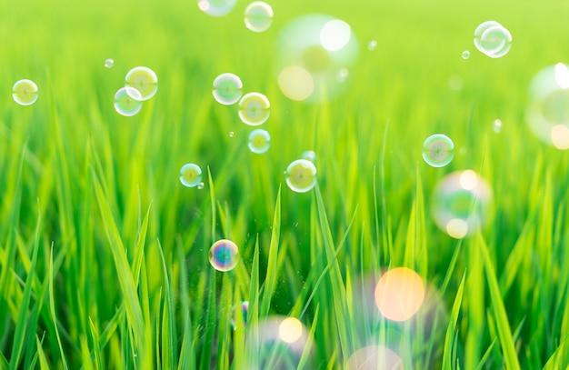Afbeeldingen van groene planten, lente en bubbels