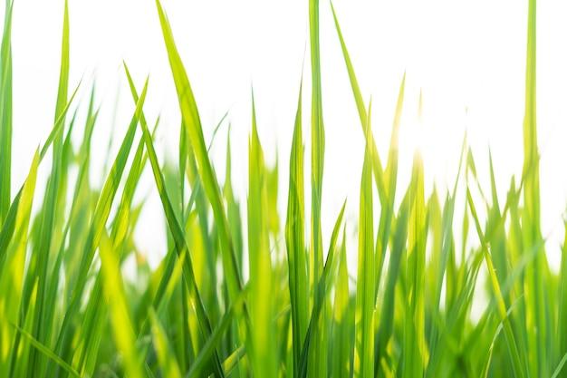 Afbeeldingen van verse planten, lente