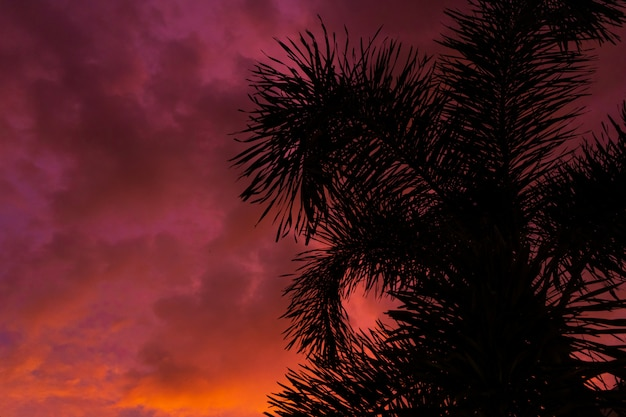 Afgetekend door een palmboom op de achtergrond van een ongebruikelijke vurige rode tropische zonsondergang.
