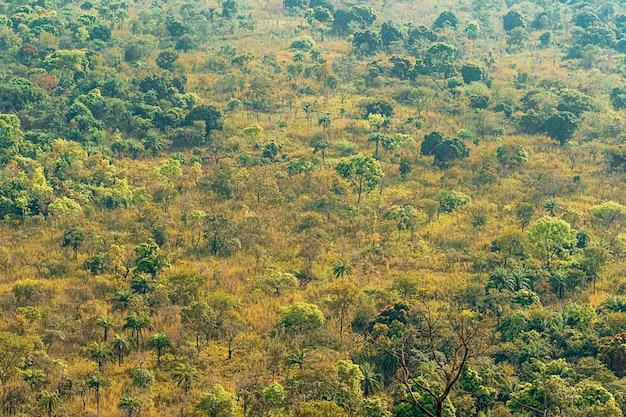 Afrikaans natuurlandschap met vegetatie en bomen