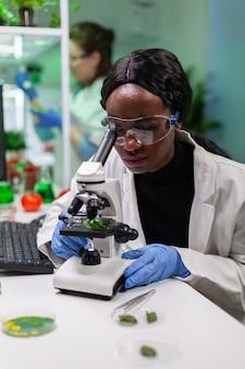 Afrikaanse bioloogonderzoeker die ggo-groen blad analyseert met behulp van medische microscoop. scheikundige wetenschapper die biologische landbouwplanten onderzoekt in het wetenschappelijk laboratorium van de microbiologie.