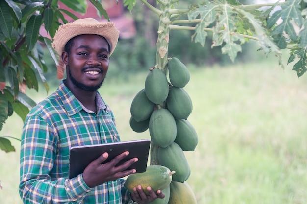 Afrikaanse boer met hoed die tablet gebruikt op het gebied van biologische papajaplantages. landbouwinnovatie of teeltconcept