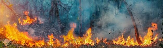 Afrikaanse bosbranden in het congobekken, centraal-afrika