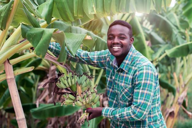 Afrikaanse landbouwer die groene banaan op landbouwbedrijf houdt