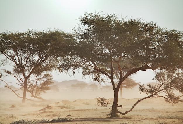 Afrikaanse landschappen - hete gele struik, bomen en blauwe lucht. conceptuele afrikaanse achtergrond.
