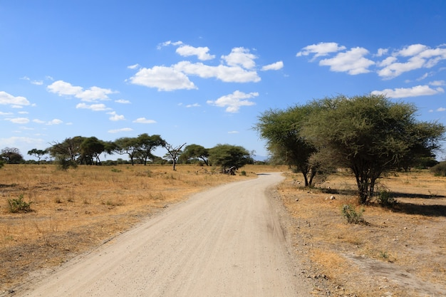 Afrikaanse safari. onverharde weg in tarangire national park, tanzania landschap, afrika.