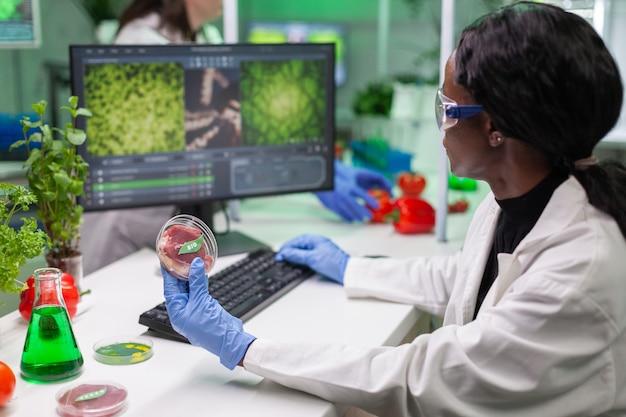 Afrikaanse scheikundige onderzoeker die petrischaal met veganistisch vlees in handen houdt terwijl hij genetische mutatie typt op de computer. wetenschapper-onderzoeker die genetisch gemodificeerd voedsel onderzoekt met behulp van chemische substanties