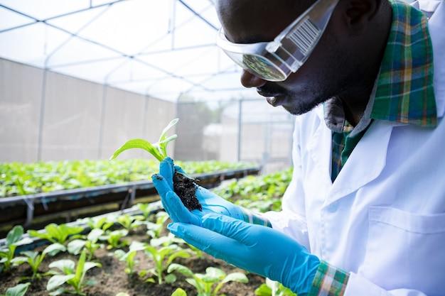 Afro-amerikaanse biotechnoloog die jonge boterbloem vasthoudt voor onderzoek op biologische boerderij