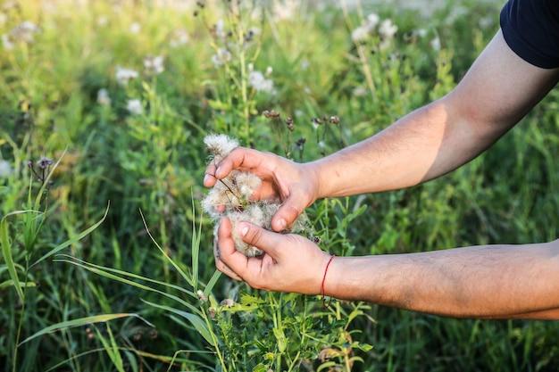 Afro-amerikaanse man verzamelt katoen in het veld. handen met plant. consumentisme in de mode-industrie. laagbetaald slavenwerk. schadelijke trends voor het milieu.