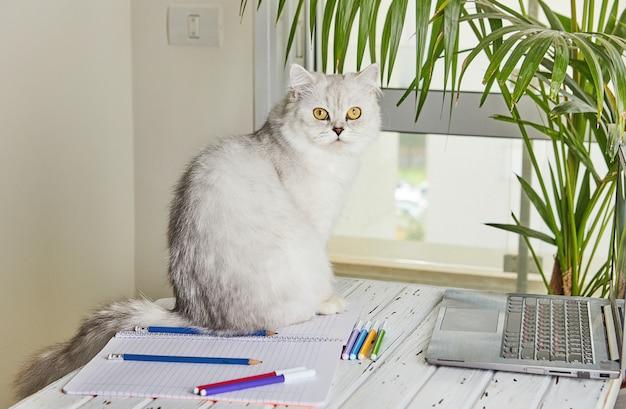 Afstandsonderwijs online onderwijs. britse kat op de tafel waar ze thuis studeren met een laptop en kinderen huiswerk maken.