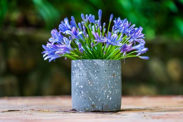 Agapanthus praecox, blauwe leliebloem in vaas op tafel