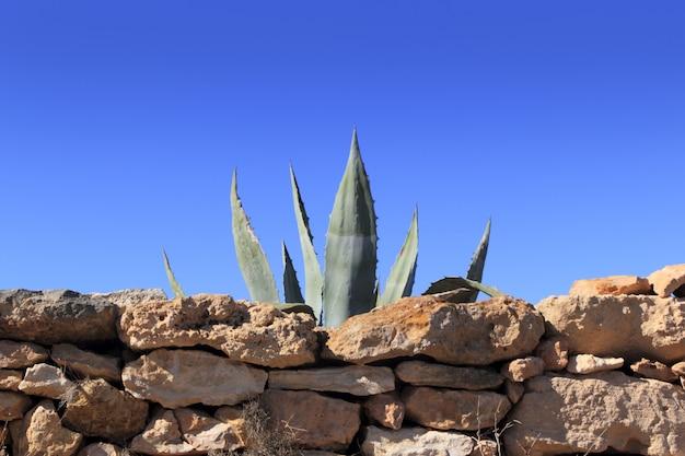 Agave pitera mediterrane stenen muur van de installatie