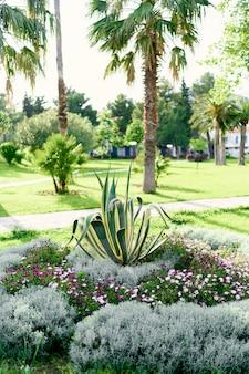 Agavestruik in het midden van een bloembed omringd door palmbomen