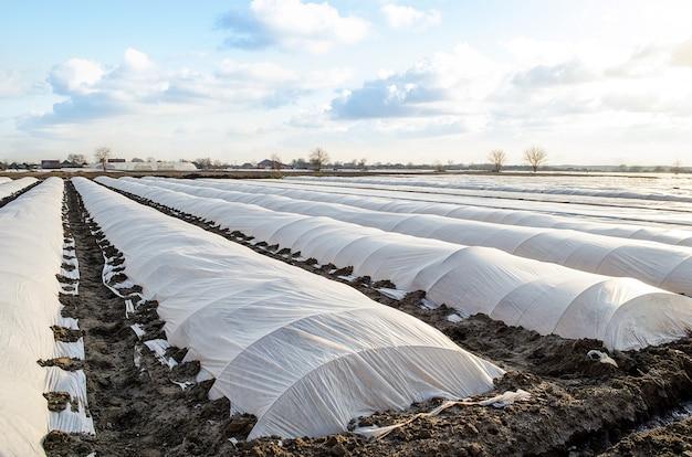 Agrarisch gebied van plantage is bedekt met spingebonden en een broeikaseffect van plastic membraan