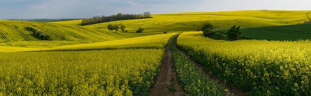 Agrarisch landschapspanorama met groot koolzaadgebied