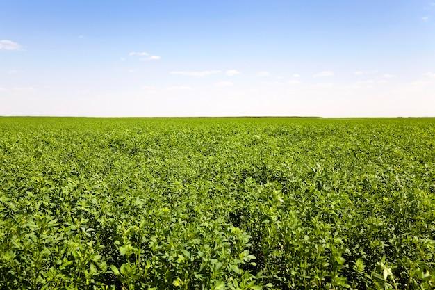 Agrarisch veld gezaaid gras tot de winter