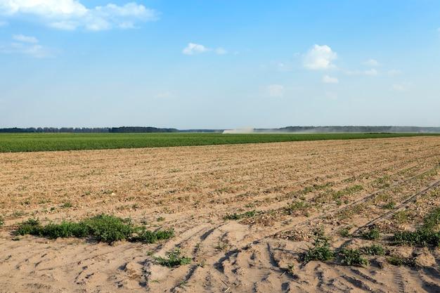 Agrarisch veld waar oogsten en uien