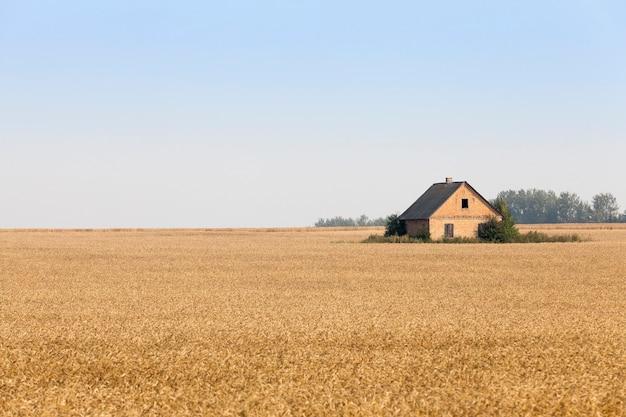 Agrarisch veld waarop het huis is gebouwd