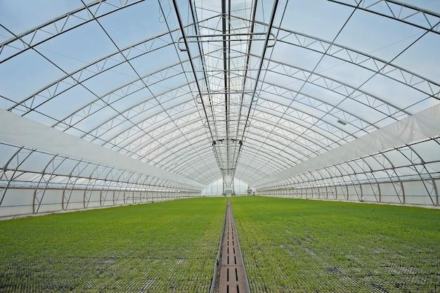 Agrarische kas voor het kweken van spruiten