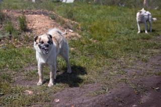 Agressieve honden