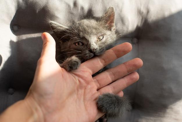 Agressieve kat bijt een persoon