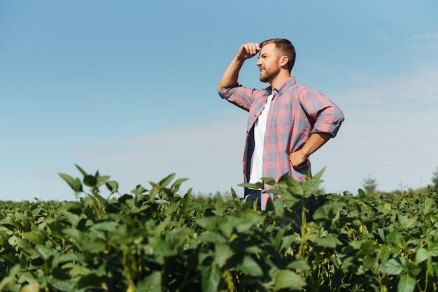 Agronoom die sojaboongewassen inspecteert die op het landbouwbedrijfgebied groeien. landbouw productieconcept. jonge agronoom onderzoekt sojabonen op het veld in de zomer. boer op sojabonenveld