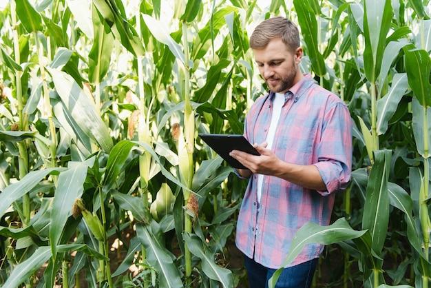 Agronoom houdt tablet-touchpadcomputer in het maïsveld en onderzoekt gewassen voordat hij wordt geoogst. agribusiness-concept. braziliaanse boerderij.