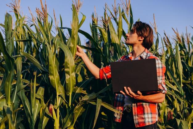 Agronoom in een maïsveld die de opbrengst regelt en een plant met laptop beschouwt.