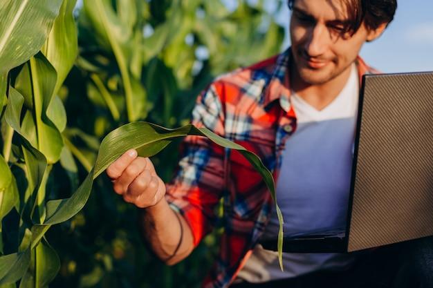 Agronoom in een veld dat de opbrengst regelt en een plant met laptop beschouwt