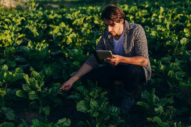 Agronoom in een veld dat de opbrengst regelt met ipad en een plant beschouwt