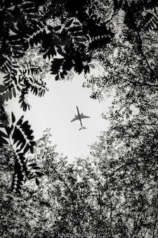 Airplain die over een bos vliegt