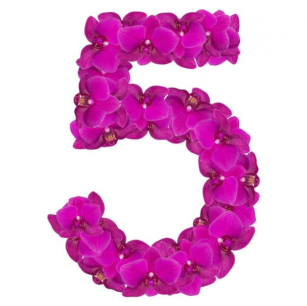 Alfabet nummer vijf van orchideebloemen die op wit worden geïsoleerd