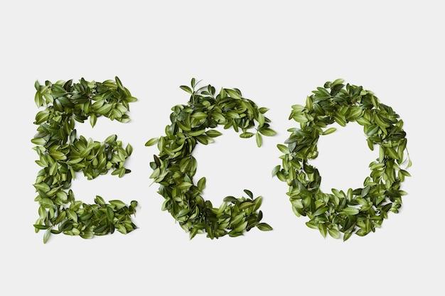Alfabet woord eco gemaakt van groene bladeren geïsoleerd op een witte achtergrond