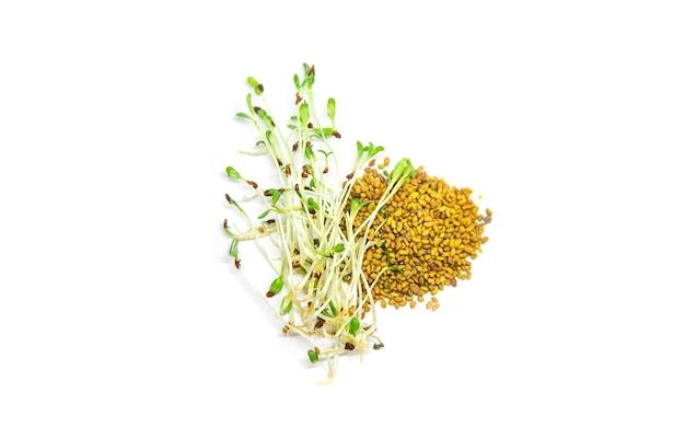 Alfalfa microgreen op witte achtergrond isoleren. selectieve aandacht. natuur.