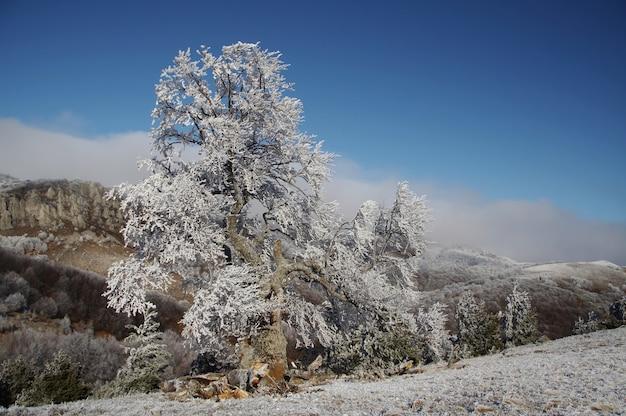 Alleen bevroren boom op winterlandschap