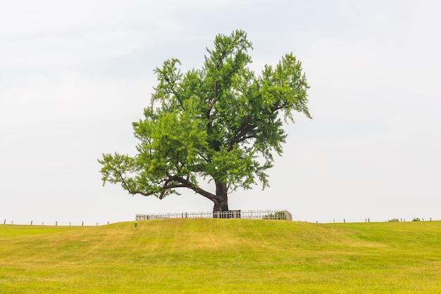 Alleen boom bij olympisch park in seoel, zuid-korea.