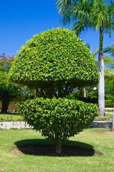 Alleen boom op de groene tuin