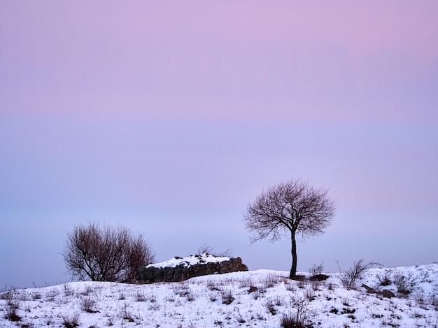 Alleen boom op het gebied van de de winterkust in zonsondergang roze, purpere hemel met rotsen en sneeuw