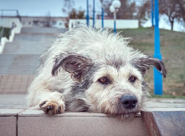 Alleen dakloze ruige hond met doordringende ogen.