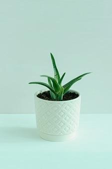 Aloëbloem in een pot