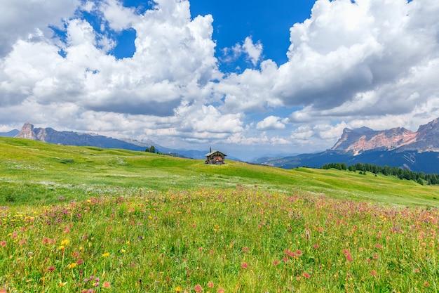 Alpenweide met wilde bloemen in de italiaanse dolomieten.
