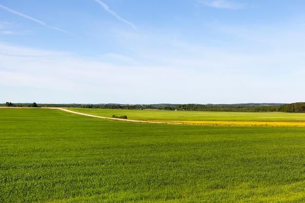 Als de economische velden met verschillende planten van groen en andere kleur