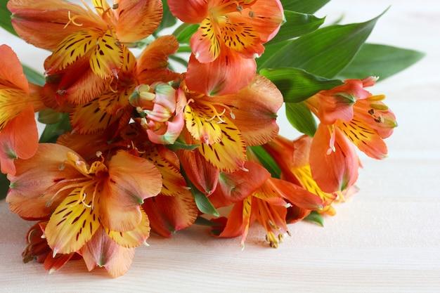 Alstroemeria, rood-gele bloemen