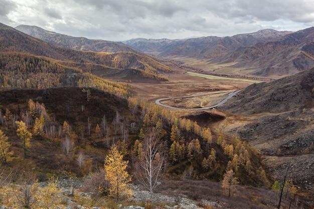 Altai bergen herfst gele bomen