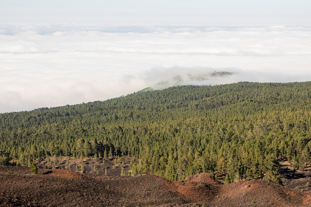 Altijdgroen bos met witte wolken