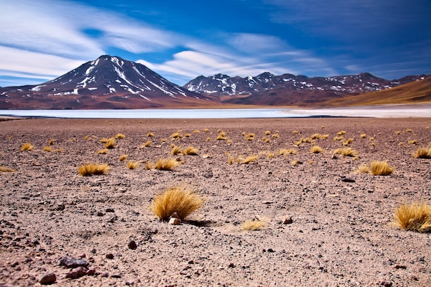 Altiplano lagune miscanti nabij cerro miscanti, woestijn atacama, chili