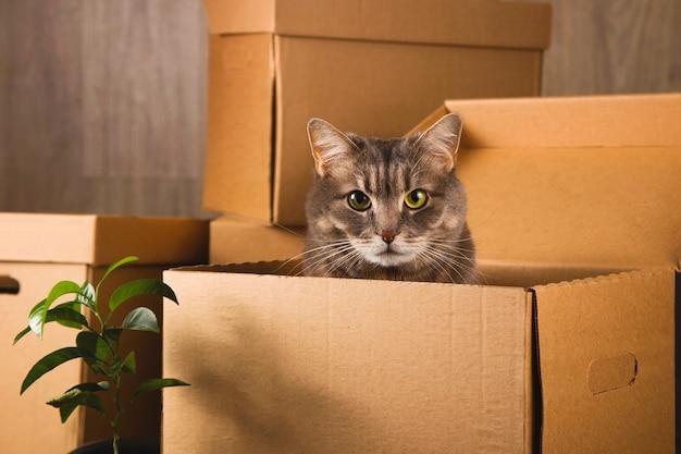 Ambachtelijke dozen voor het verzamelen van dingen en verhuizen naar een ander appartement. nieuw woon- en verhuisconcept.
