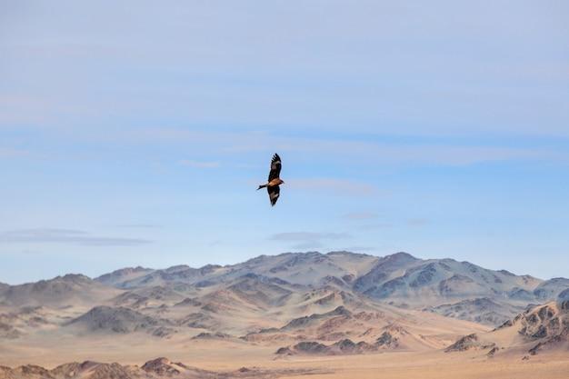 Amerikaanse bruine kale adelaar tijdens de vlucht